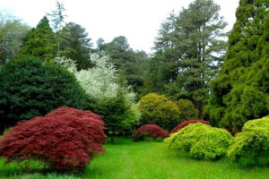 батумский ботанический сад фото